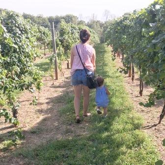 Beautiful Hamlet Vineyards